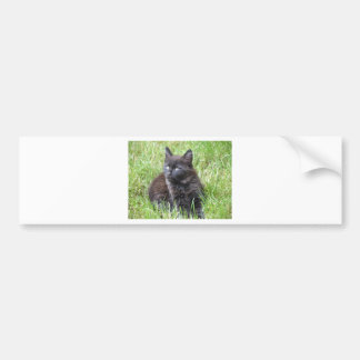 gato - jardín etiqueta de parachoque
