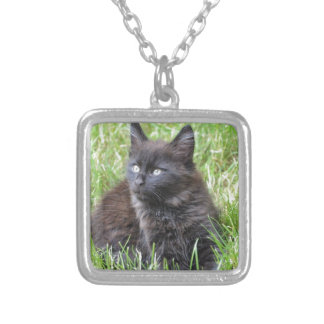 gato - jardín pendientes