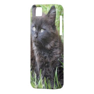 gato - jardín iPhone 5 Case-Mate protectores