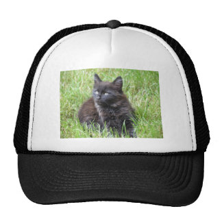 gato - jardín gorros