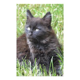 gato - jardín  papeleria de diseño