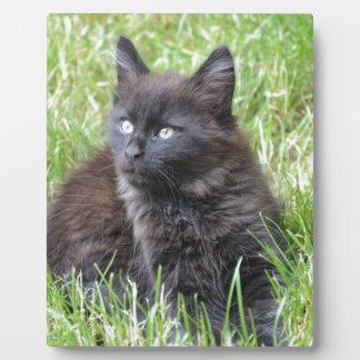 gato - jardín placas con fotos