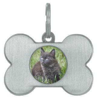 gato - jardín placa de mascota