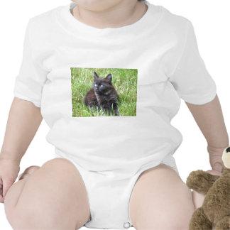 gato - jardín trajes de bebé