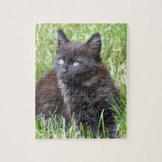 gato - jardín puzzle con fotos