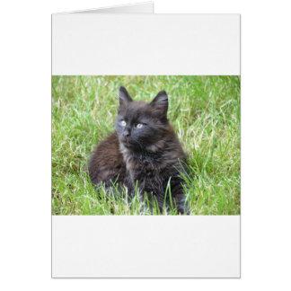 gato - jardín felicitación