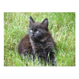 gato - jardín tarjeta postal