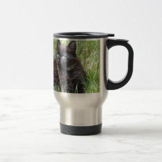 gato - jardín tazas de café