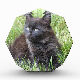 gato - jardín