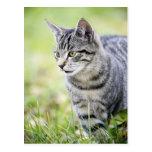 Gato joven en naturaleza postales