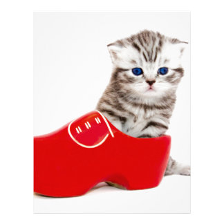 Gato joven en zapato o grupo de madera rojo plantillas de membrete