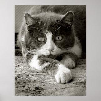 Gato juguetón - poster