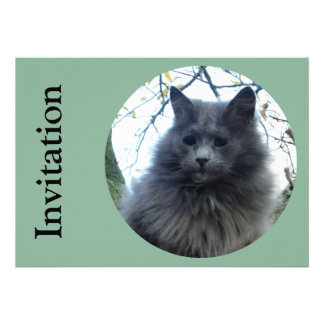 Gato Kyra en un árbol Invitaciones Personalizada