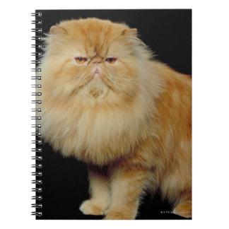 Gato largo ruso del pelo cuaderno