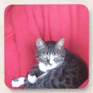 gato lindo aliado posavaso