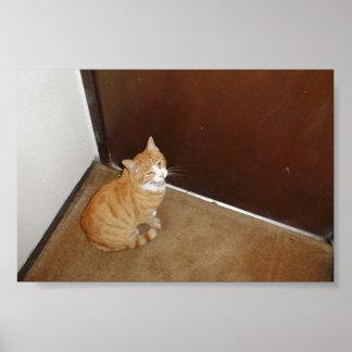 Gato lindo cerca de la puerta en la alfombra posters