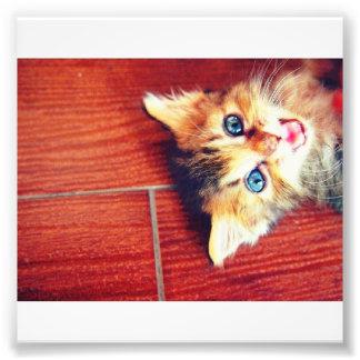 Gato lindo cojinete
