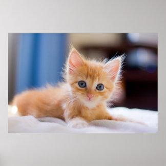 Gato lindo con los ojos azules póster