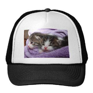 Gato lindo del gatito gorro
