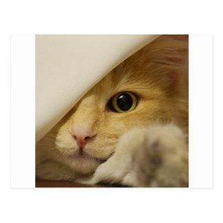 Gato lindo del gatito tarjetas postales