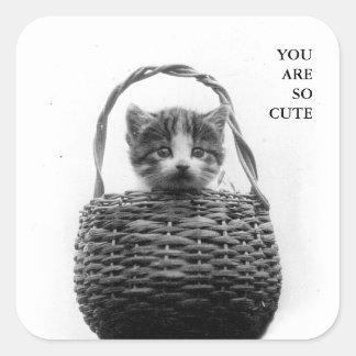 Gato lindo en una foto del vintage de la cesta pegatina cuadrada