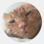 gato lindo etiqueta redonda