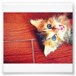 Gato lindo foto