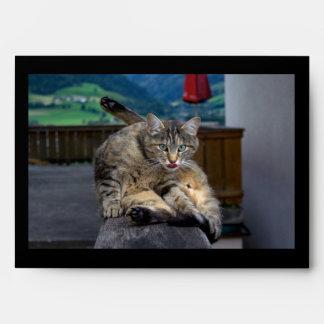 Gato lindo interrumpido mientras que prepara sobre