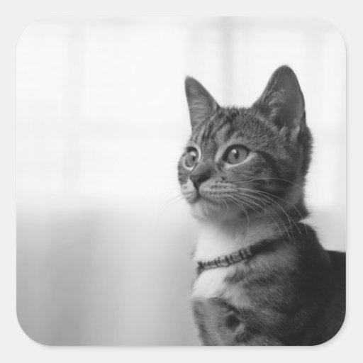 Gato lindo pegatina cuadrada