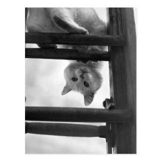 gato lindo que cuelga upside-down en escalera tarjetas postales