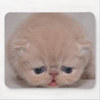 gato lindo tapete de ratones