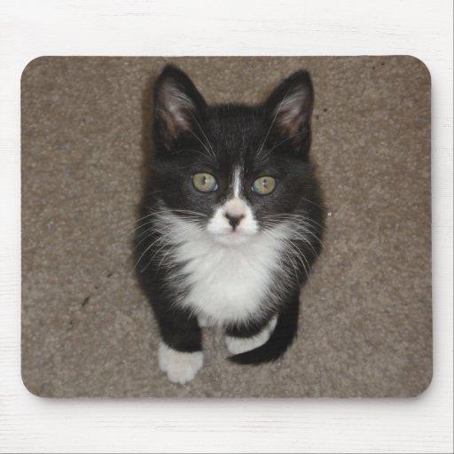 Gato lindo tapetes de raton