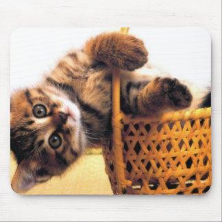 Gato lindo tapetes de ratones