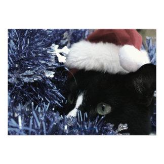 Gato listo para saltar detrás de la malla azul ti anuncios