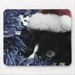 Gato listo para saltar detrás de la malla azul, ti tapetes de raton