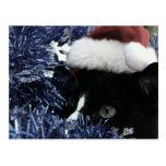 Gato listo para saltar detrás de la malla azul, ti tarjetas postales