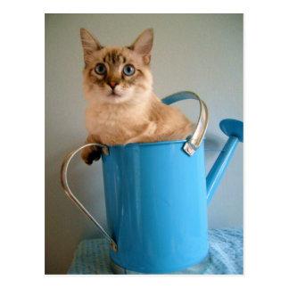 Gato magnífico en poder del agua postales