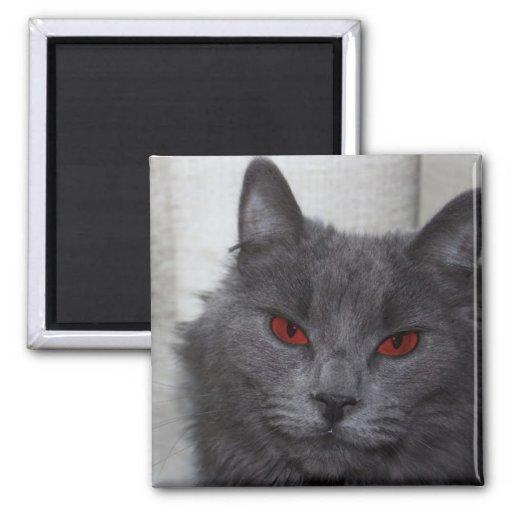 Gato malvado imán cuadrado