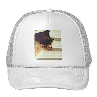 gato marrón gorro