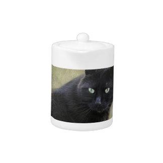 Gato masculino negro con los ojos verdes
