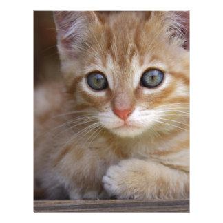 gato membrete personalizado