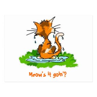 Gato mojado gruñón tarjetas postales