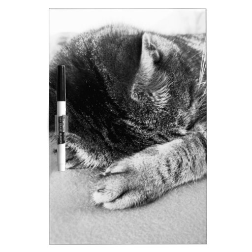 gato mono duerme en la cama edulcora pizarra