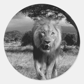 Gato montés del león pegatina redonda