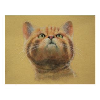Gato montés escocés postales