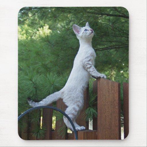 Gato Mousepad de la sabana Alfombrilla De Ratón