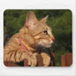 Gato Mousepad de la sabana Tapete De Ratón