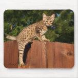 Gato Mousepad de la sabana Tapete De Raton