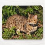 Gato Mousepad de la sabana Tapetes De Raton