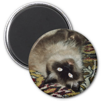 Gato mullido imán redondo 5 cm